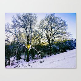 Winter Sunlight Canvas Print