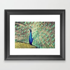 Pretty as a Peacock Framed Art Print