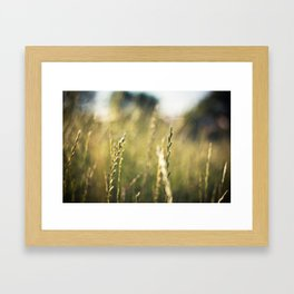 Sunlight Framed Art Print
