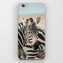 Zebra in Masaai Mara, Kenya, Africa iPhone Skin
