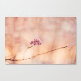 Sakura II Canvas Print
