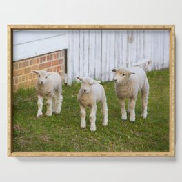 3 Little Lambs Serving Tray