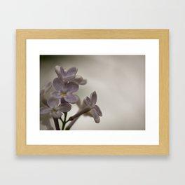 Lilac Morning Framed Art Print