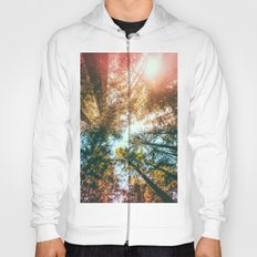 California Redwoods Sun-rays and Sky Hoody