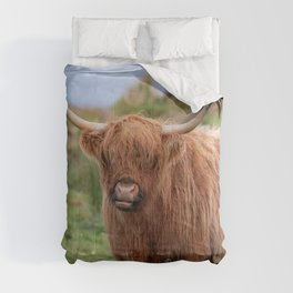 Long haired Highland cattle - Highland cow, Highlander, Heilan coo - Thurso, The Highlands, Scotland Comforters