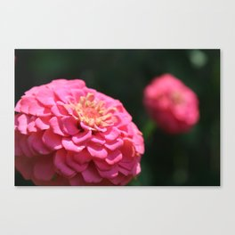 MORE PINK FLOWERS Canvas Print