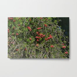 Romantic exotic flowers from the garden Metal Print