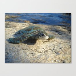 Green Sea Turtle Wool Sculpture Canvas Print