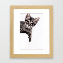 Janine, a beautiful cat Framed Art Print
