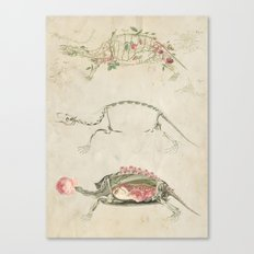 anatomy of the turtle *collage Canvas Print
