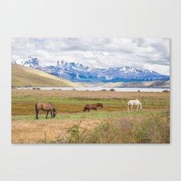 Torres del Paine - Wild Horses Canvas Print