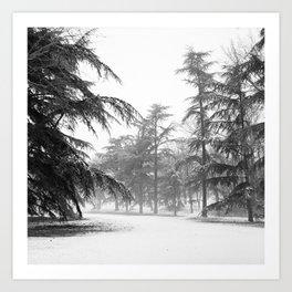 Majestic trees Art Print