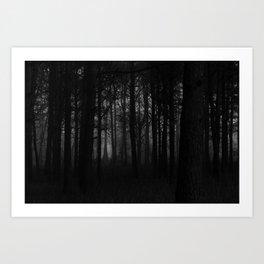 Murky Woods Art Print