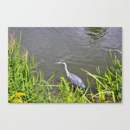 Beautiful Blue Heron Canvas Print