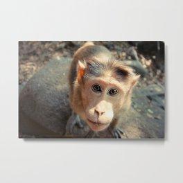 Monkey Of Dudhsagar Waterfalls Metal Print