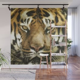Face of Tiger Wall Mural