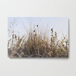 grass in the frost Metal Print