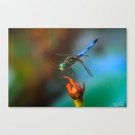 Dragon Fly.... Canvas Print