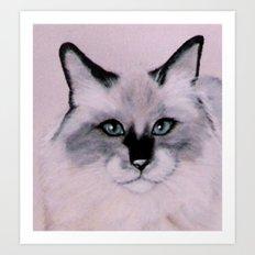 Birman Cat painting Art Print