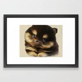 Pommy Framed Art Print