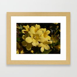 Yellow Carolina Jasmine Blossom Close Up Framed Art Print