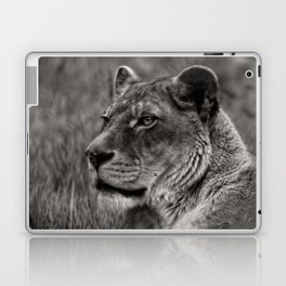 Lioness Portrait Laptop & iPad Skin