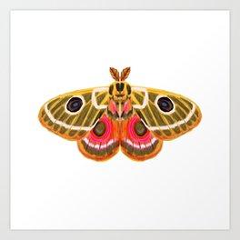 Moth Study No. 15 - moth art, moth sticker Art Print