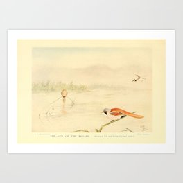 E C Arnold - A Bird Collector's Medley (1907): The Gem of the Broads (Great Crested Grebe) Art Print