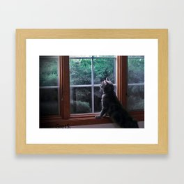Cat 3 Framed Art Print