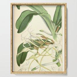 Cyrtorchis chailluana (as Angraecum chailluanum) Curtis' 92 (Ser. 3 no. 22) pl. 5589 (1866) Serving Tray