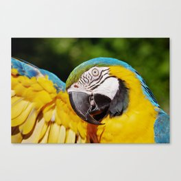 Yellow, Blue & Green Parrot Canvas Print