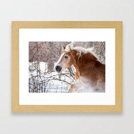 Horse in Snow Framed Art Print