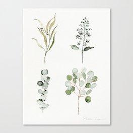 Eucalyptus Branches Canvas Print
