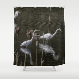 Three Great Egrets Among the Ducks, No. 1 Shower Curtain