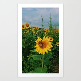 Ladies Love Sunflowers Art Print