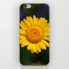 Yellow Daisy 4217 iPhone & iPod Skin