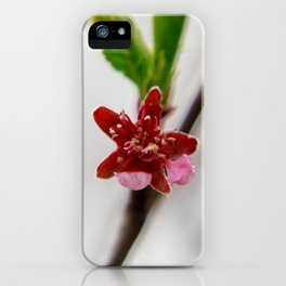 Red peach blossom iPhone Case