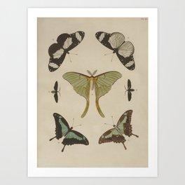 BUTTERFLIES Pieter Cramer Art Print