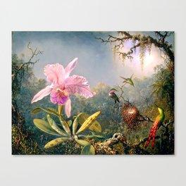 Nature's Fantasy : Cattyela Orchid and Three Brazilian Hummingbirds Canvas Print