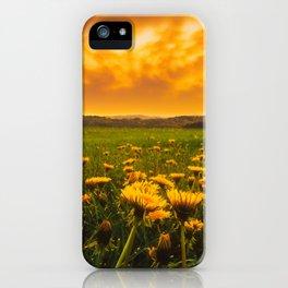 Dandelion Field Under Fiery Sky iPhone Case