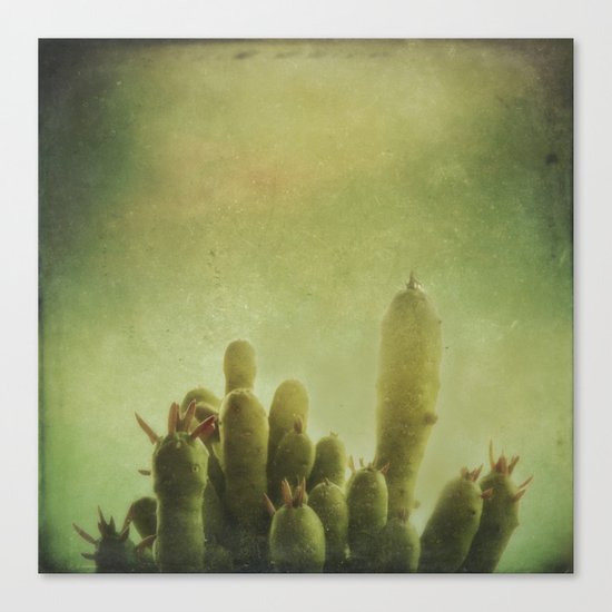 Cactus in my mind Canvas Print
