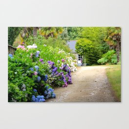 Hydrangea lined path in Bretagne, France Canvas Print
