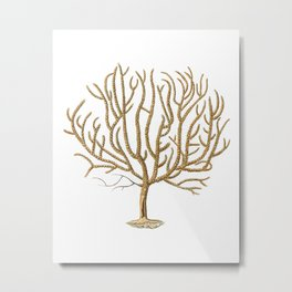 Sea Coral No.4 Antique Natural History Print Metal Print