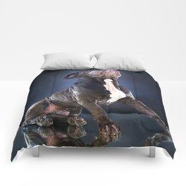Super Pets Series 1 - Super Liam Comforters