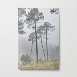 Dream Pines. Living In A Dream. Foggy sunrise. Metal Print
