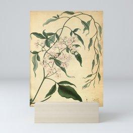 Flower solanum seaforthianum Seaforth s Solanum Mini Art Print