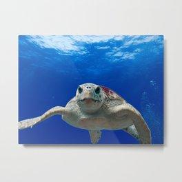 Loggerhead Turtle Metal Print