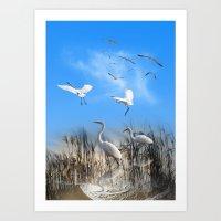 White Egrets in a Morning 1 Art Print