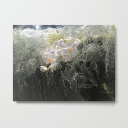 White orchids dramatic photo Metal Print