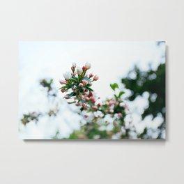Sweet Apple Blossom Metal Print
